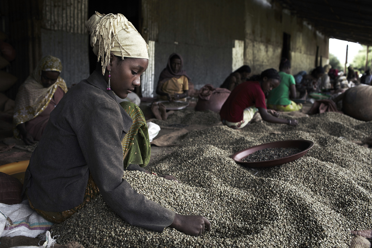 ethiopia main export coffee