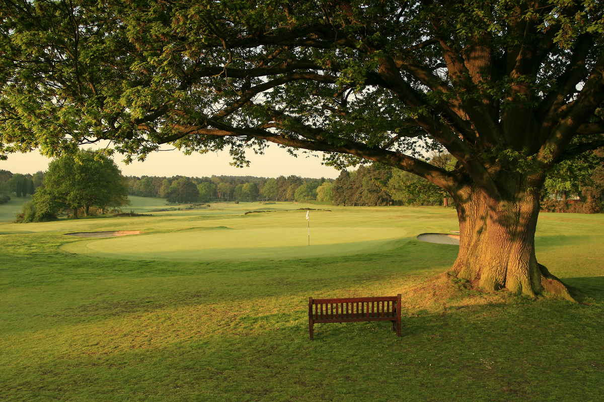 A tree overhangs a bench in the Sunningdale Golf Club Old Course hole 18.