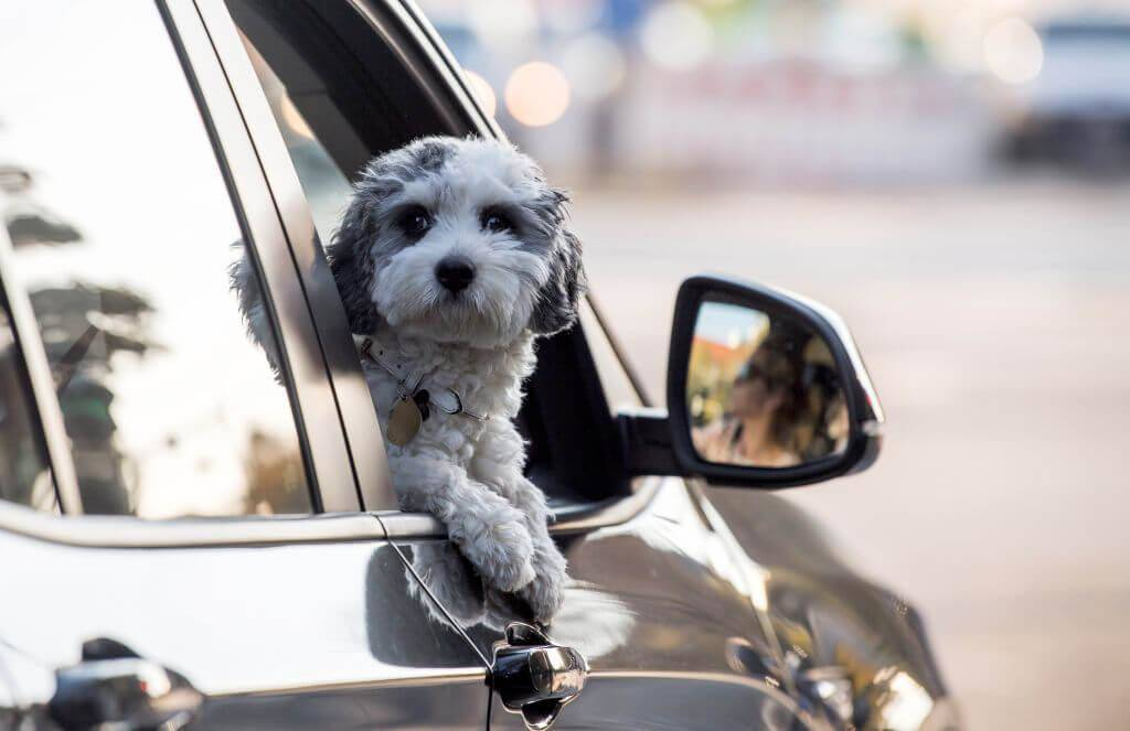 Squeegee Your Seats To Remove Dog Hair