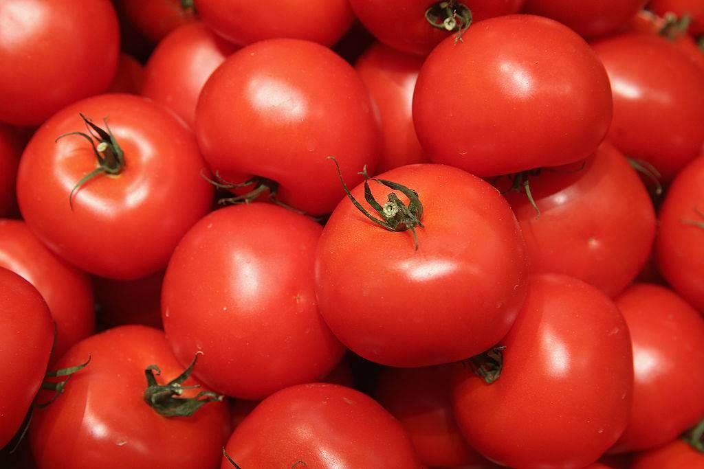 Organic tomatoes on display
