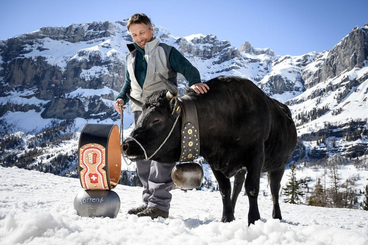 A resident poses with his award-winning cow in Albinen, Switzerland.