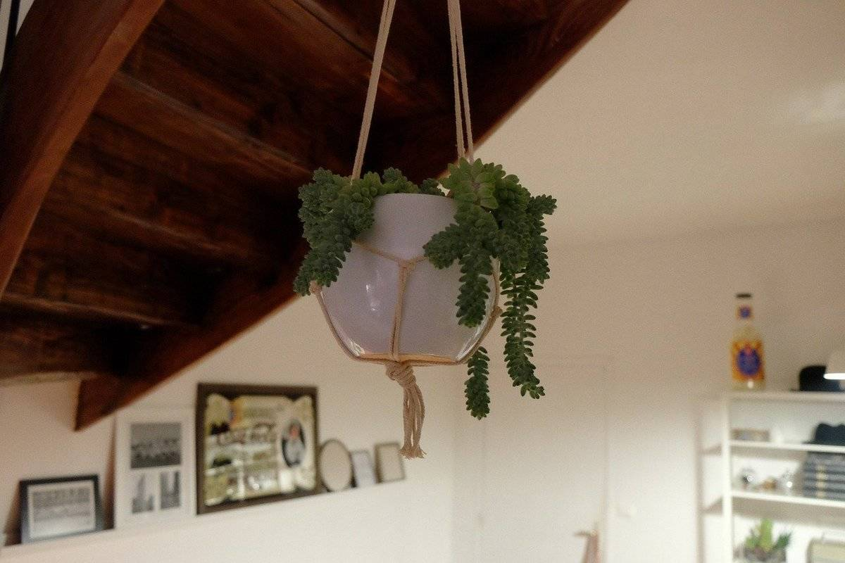 A plant hangs from the ceiling in an apartment.